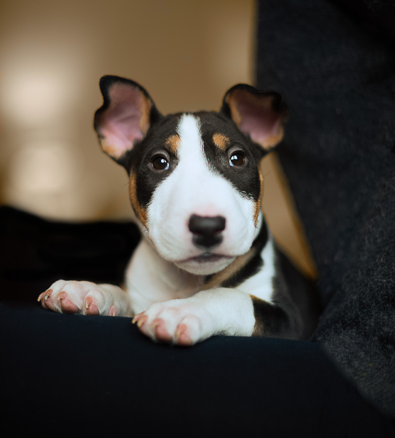 New Puppy Photography