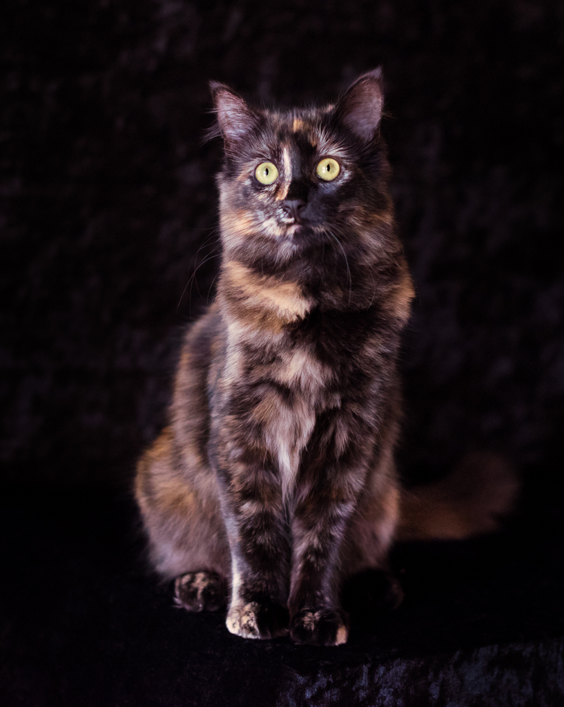 Calico Portrait