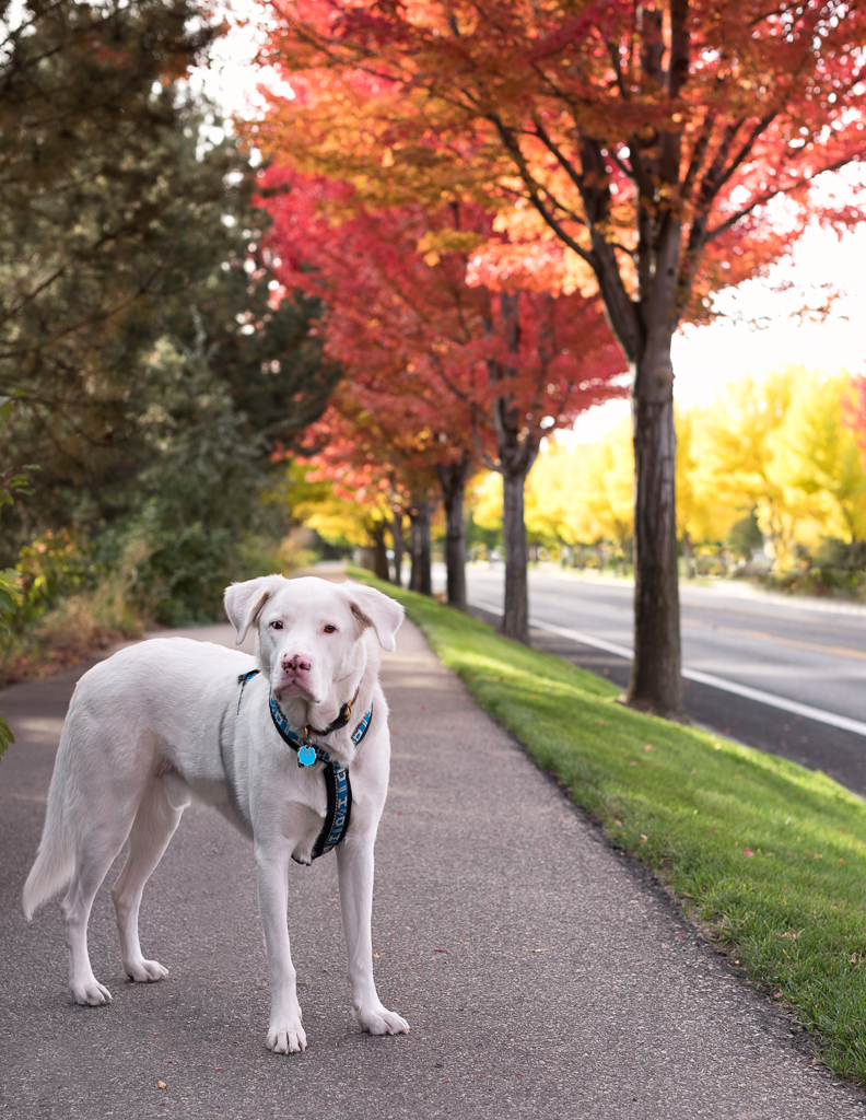 Fall dog picture