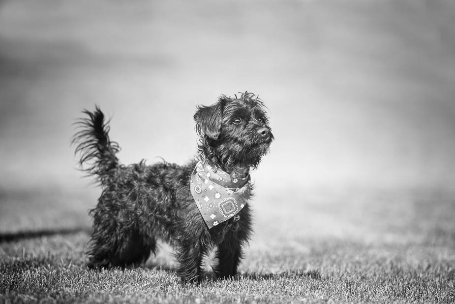 B & W Pet Photography